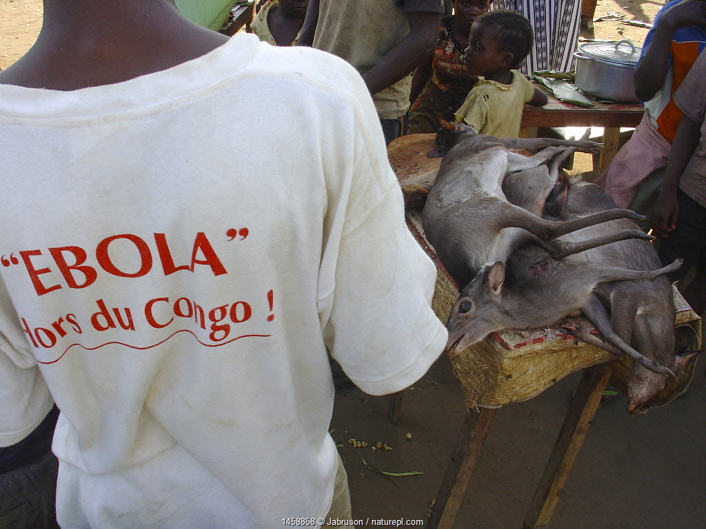 Blue Duiker (Cephalophus monticola) meat for sale at market. Mbomo, Odzala-Kokoua National Park, Republic of Congo, May 2005, with Man wearing 'Ebola hors du Congo' t-shirt during Ebola virus outbreak