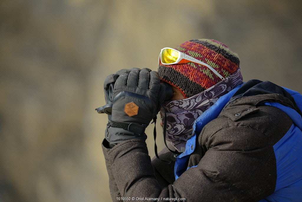 Tracker looking with binoculars for Snow leopard (Panthera uncia) in Spiti valley, Cold Desert Biosphere Reserve, Himalaya mountains, Himachal Pradesh, India