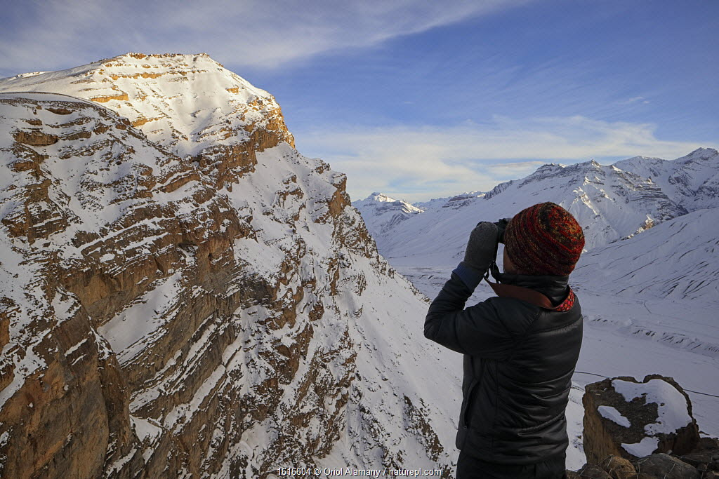 Woman watching a Snow leopard (Panthera uncia) resting on a distant cliff, Spiti valley, Cold Desert Biosphere Reserve, Himalaya mountains, Himachal Pradesh, India