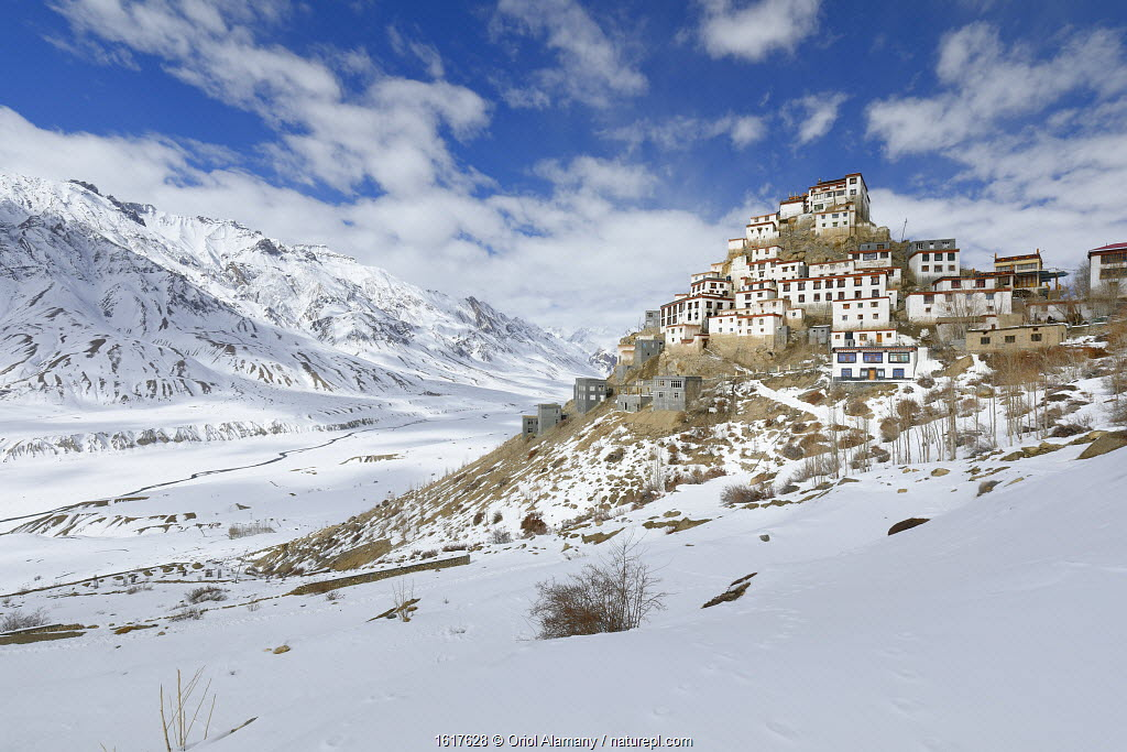 Key monastery at 4,170 metres,Spiti valley, Cold Desert Biosphere Reserve, Himalaya mountains, Himachal Pradesh, India, February