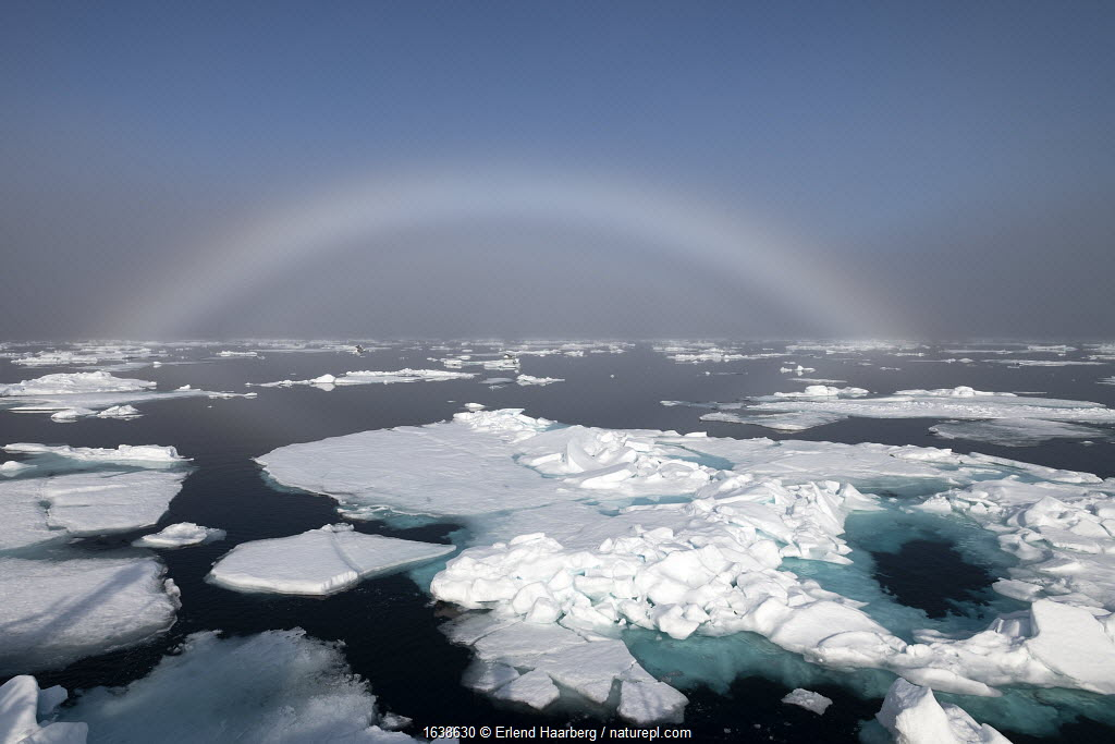 Fogbow over sea ice. Fogbows are similar to a rainbow, but produced by very small droplets in fog or cloud, which diffract light, instead of large raindrops which do not, Svalbard, Norway, July.
