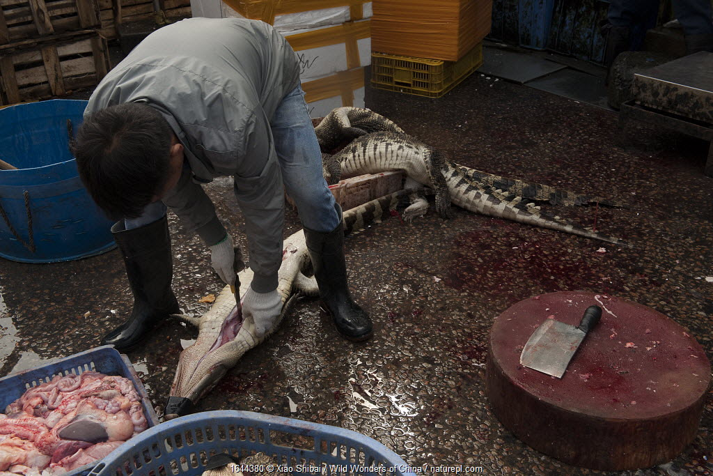 Traders dismembering crocodiles in the Conghua market, Guangzhou, China.