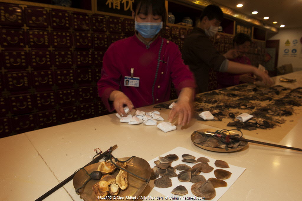 Pangolin scales for sale in a Chinese medicine store in Beijing, China.