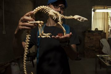 Pangolin skeleton, one of the products confiscated by forest police, at the Nanning Wildlife Rescue Center, Nanning, China.