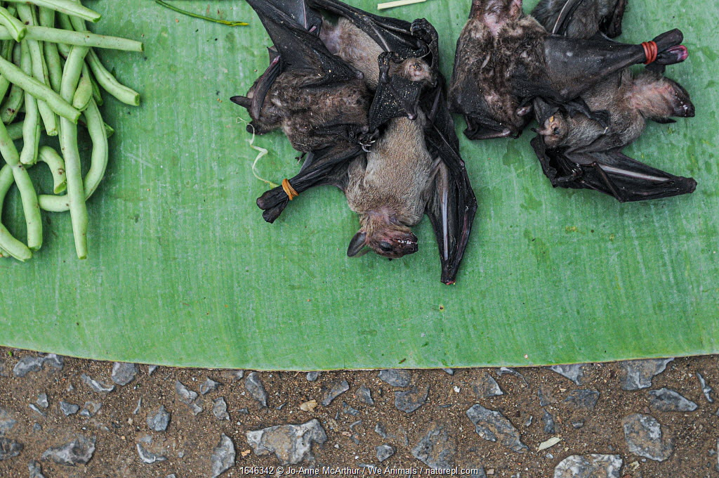 Dead bats and green beans for sale on market stall, Luang Prabang, Laos.