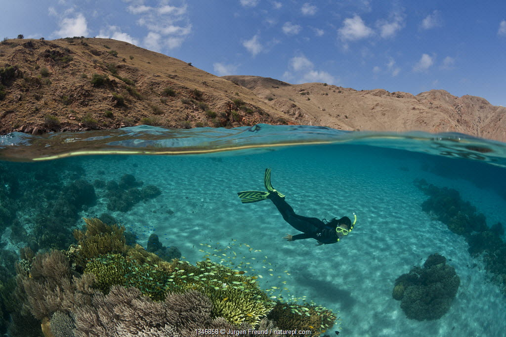 Split level of snorkeler over coral reef on white sandy seabed contrasting with dry topside landscape in background, Komodo NP, Indonesia, August 2009. Model released.