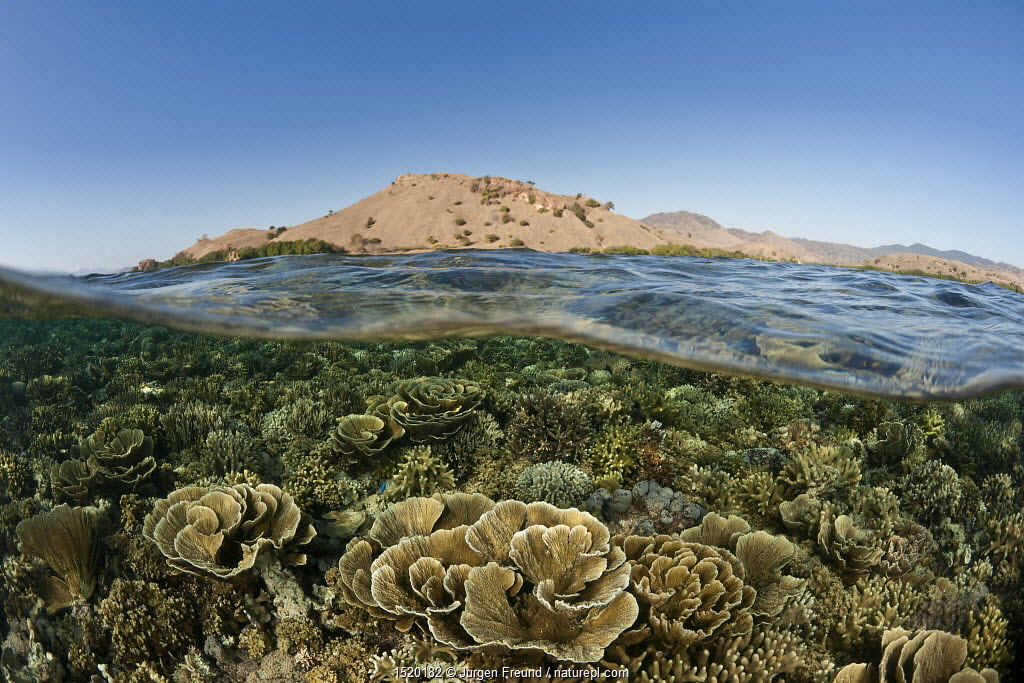 Split level view of coral reef, Komodo National Park, Flores, Lesser Sunda Islands, Indonesia. Second Place in the Portfolio Award of the Terre Sauvage Nature Images Awards Competition 2015.