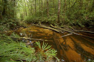 Stream in Sumatran rainforest, Batang Toru Forest, Sumatran Orangutan Conservation Project, North Sumatran Province, Indonesia.