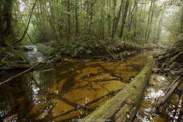 Rainforest stream with orange colored tannin-rich waters, Batang Toru Forest, Sumatran Orangutan Conservation Project, North Sumatran Province, Indonesia
