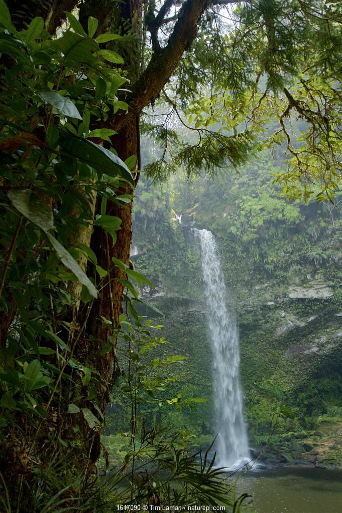 Rainforest waterfall. Batang Toru Forest, Sumatran Orangutan Conservation Project, North Sumatran Province, Indonesia.