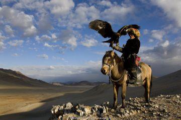 Kazakh eagle hunter (Berkutchi) on horseback with his Golden eagle (Aquila chrysaetos) Altai, Mongolia. Model released.