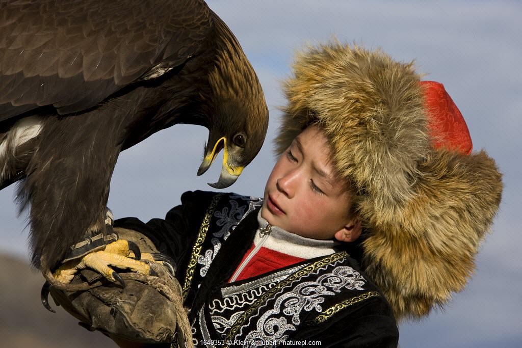Young Eagle hunter (Berkutchi) with his Golden eagle (Aquila chrysaetos) portrait, Altai, Mongolia. Model released.