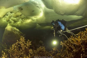 Diver is swimming under the ice pack in shallow water Russia. White Sea.