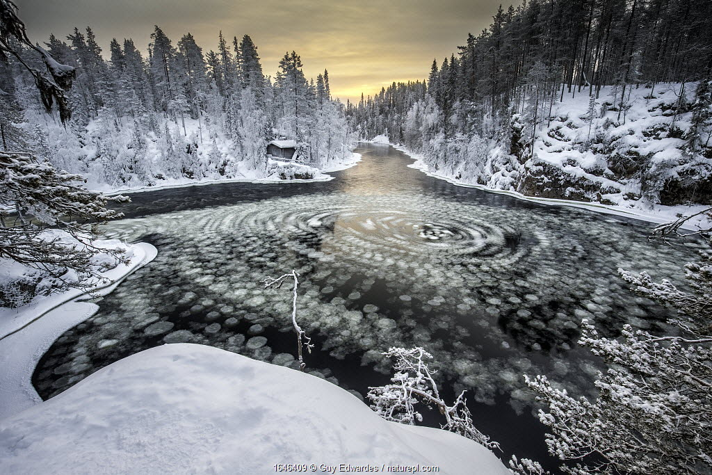 Pancake ice on the Kitka River, Kuusamo, Finland, January 2016