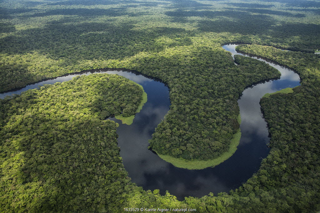 Aerial view of tropical rainforest and meandering river, Salonga National Park, Democratic Republic of Congo May 2017.