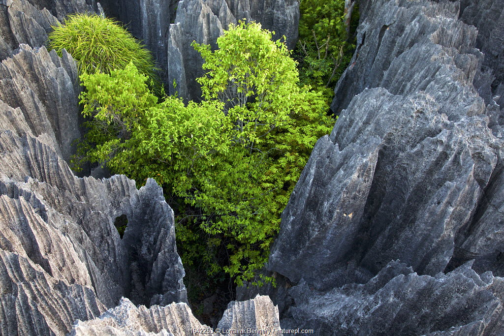 Rock formations in Tsingy Bemaraha National Park, Madagascar.