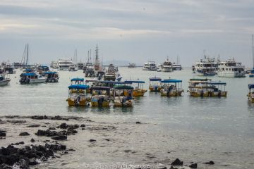 Dozens of tour boats lay idle in port,during Covid-19 lockdown, Puerto Ayora, Santa Cruz Island, Galapagos Islands April 2020