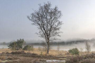 Misty morning landscape, Klein Schietveld, Brasschaat, Belgium. April