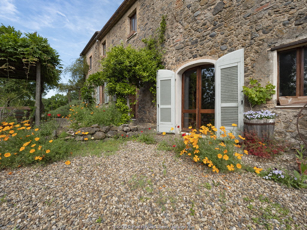 Home of photographer Paul Harcourt Davies, with self-seeded flowers. Podere Montecucco, Umbria, Italy, June 2020.