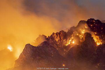 Lightning caused wildfire on Mount Lemmon, Coronado National Forest, Arizona, USA, 11th June 2020.