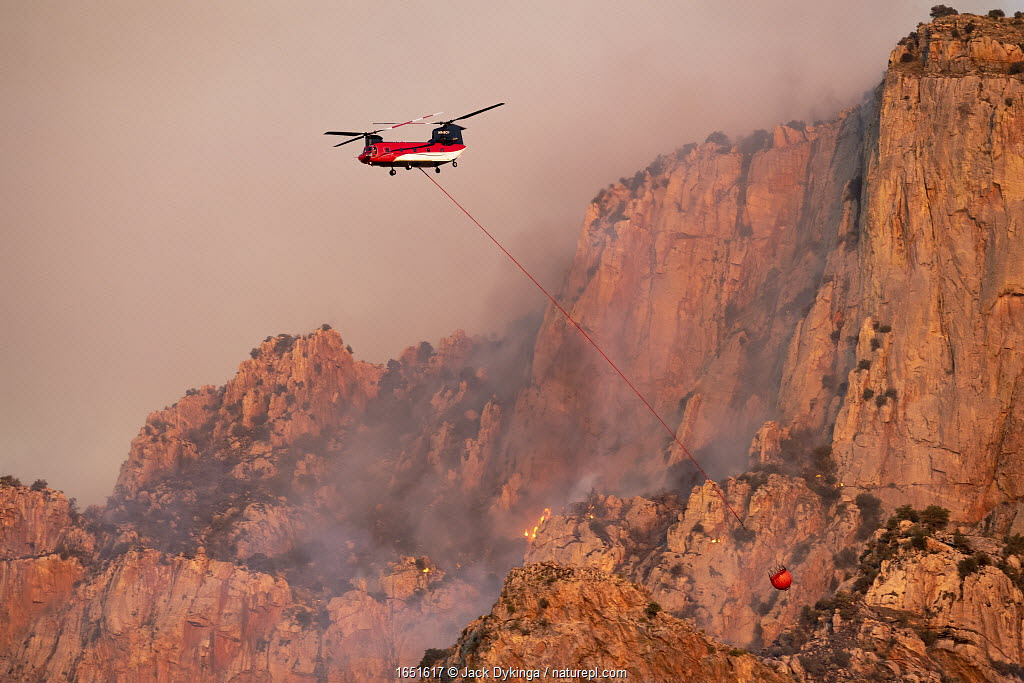 Lightning started fire on steep craggy terrain, with US Forest Service Fire suppression Wildland Firefighters using helicopters to 'bomb' the hot spots to control the spread. Pusch Ridge, Santa Catalina Mountains, Coronado National Forest, Arizona, USA. 6th June. June 2020.