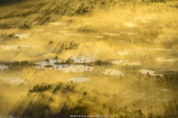 Aerial view of a golden and foggy sunrise over a bog area, Alam-Pedja National Park, Tatrumaa county, Southern Estonia. May.