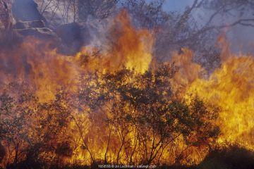 Bushfire in dry tropics - King Leopold Range, Kimberley Region, Western Australia. May 2003.