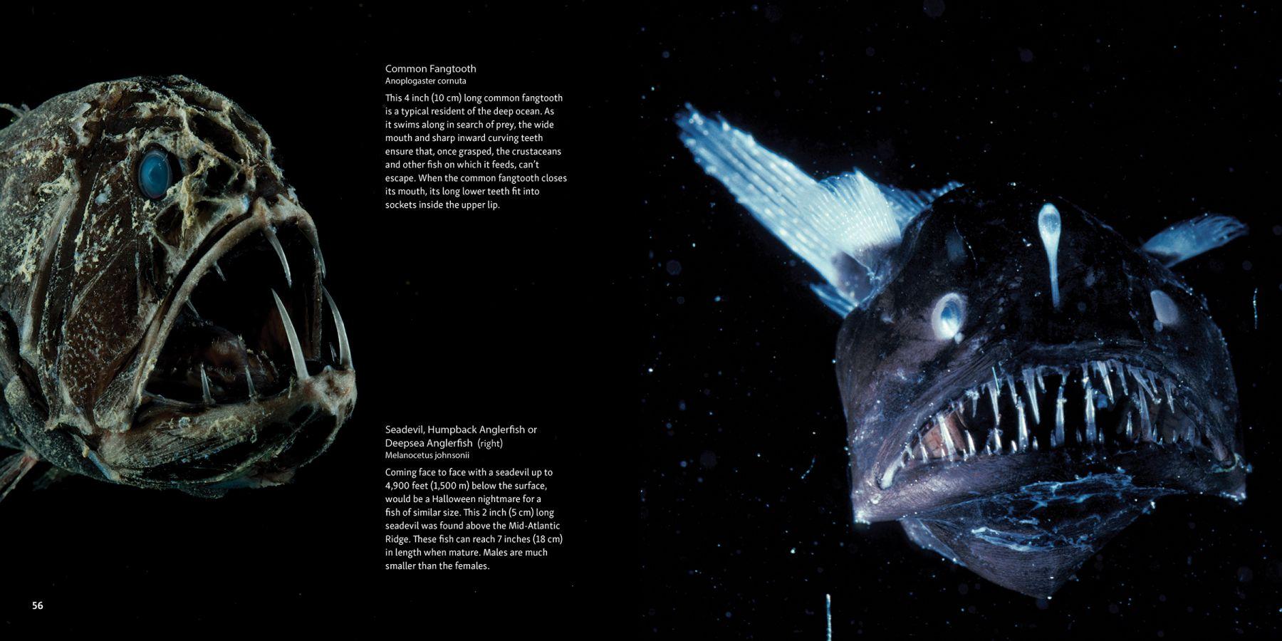 Fang Tooth and Anglerfish