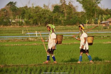 2 Kayan Lahwi women with brass neck coils and traditional clothing in a rice field. The Long Neck Kayan (also called Padaung in Burmese) are a sub-group of the Karen ethnic people from Burma. They are in majority and grow their own rice.They wear spiral coils around their neck and lower legs.They are also nicknamed 'giraffe women'. PanPet region, Kayah state, Myanmar. April 2019.