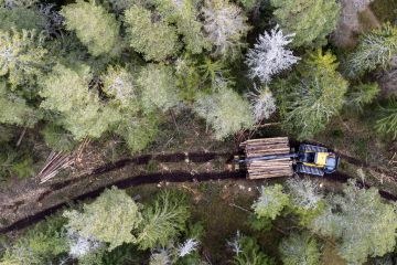 Logging operations in Spruce forest with harvester and logs, aerial view. Ski, Akershus, Norway. March 2020.