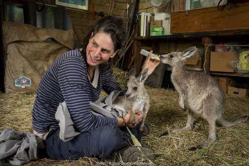 Rena Gaborov feeding Eastern grey kangaroo (Macropus gigantea) orphans in her mother-in-law's shed in Sarsfield, Victoria, Australia. January 2020