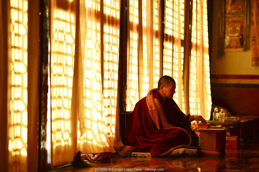 Buddhist lama in worship beside window, Sampheling Monastery, Kham, Tibet, China. 2016.