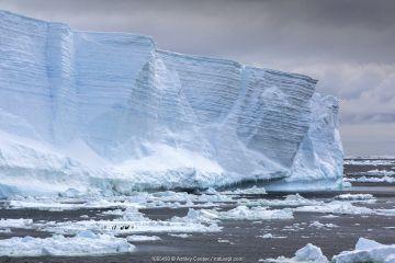 Tabular iceberg floating in Weddell Sea, iceberg broken away from Larson C ice shelf. Adelie penguin (Pygoscelis adeliae) colony dwarfed on sea ice below. Near Danger Islands, Antarctica. December 2019.