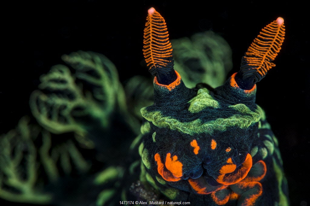 Finalist, Wildlife Photographer of the Year (WPOY) 2014 competition, Amphibians and Reptiles category.
