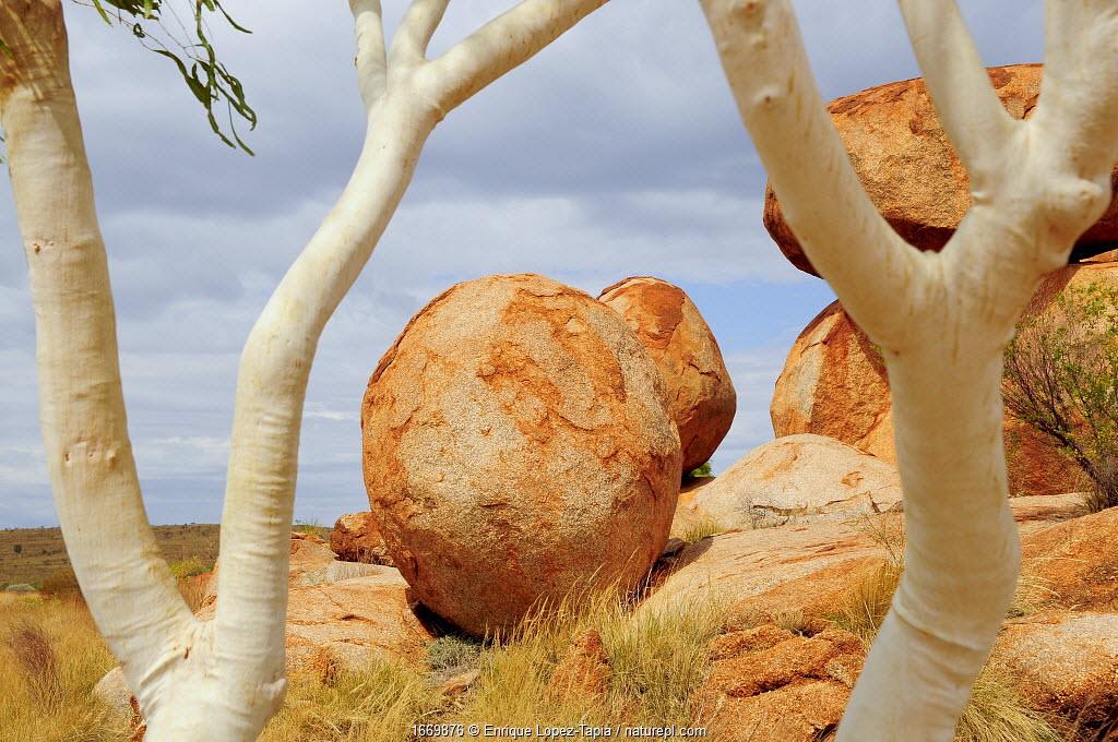 Granitic boulders at Karlu Karlu / Devils Marbles Conservation Reserve, framed by Eucalyptus tree trunks. Northern Territory, Australia. 2008.