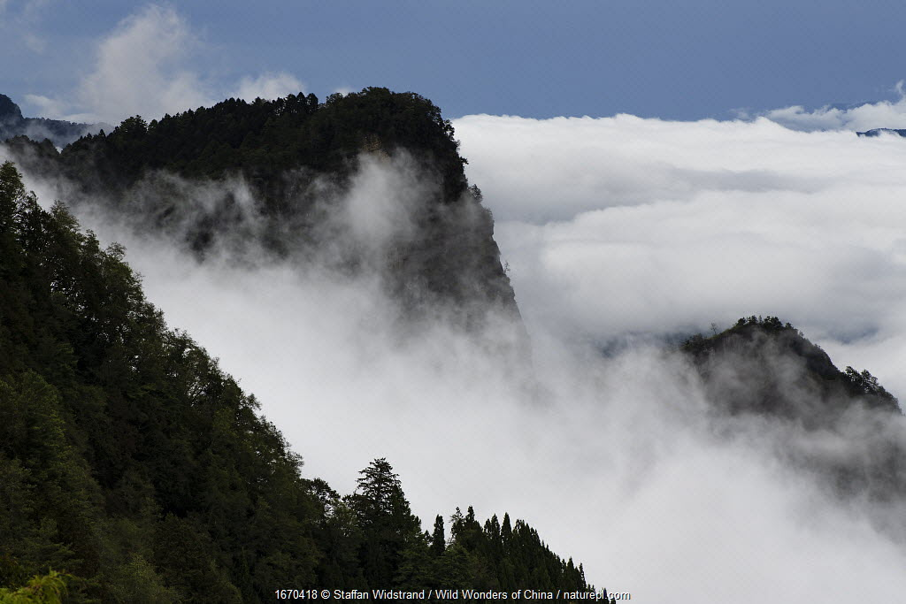 Misty mountains, Alishan National Recreational Forest, Taiwan