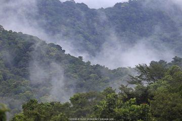 Low clouds in valley, Morne La Croix, Trinidad, April 2013