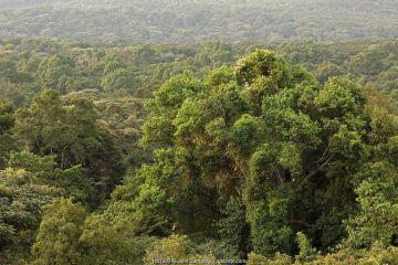 Landscape of Kakamega forest, tropical rainforest, Kenya, July 2017.