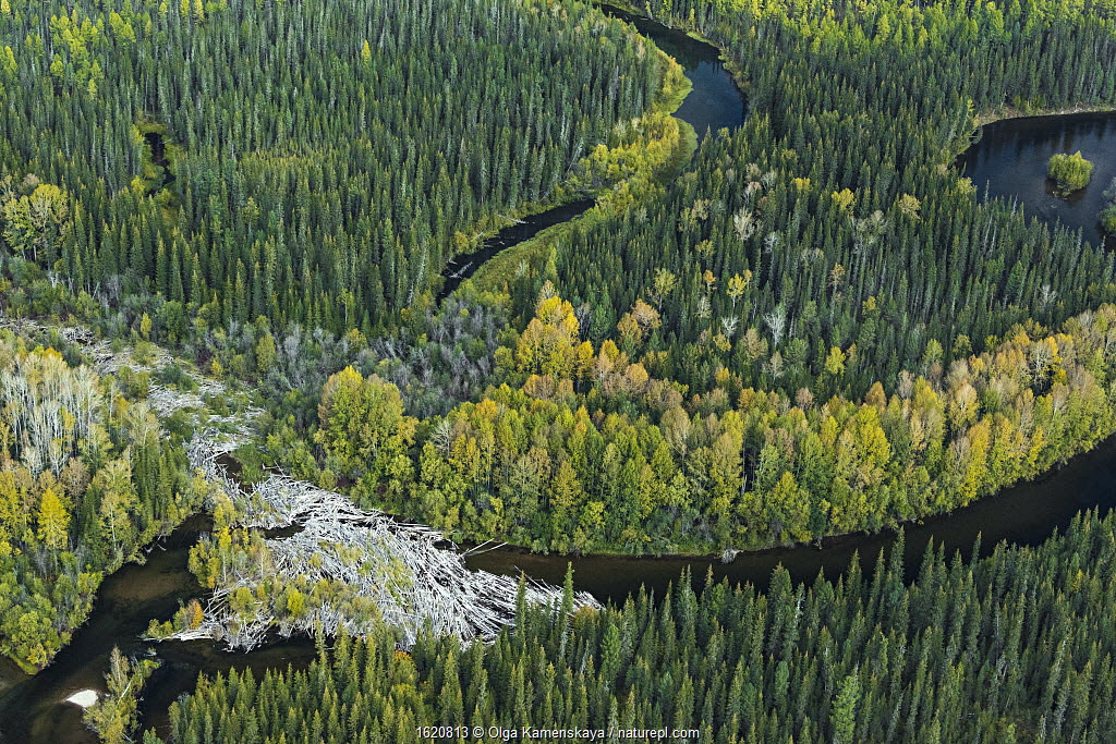 Aerial view of headwaters of the Lena River, Siberia, Russia. August 2018.