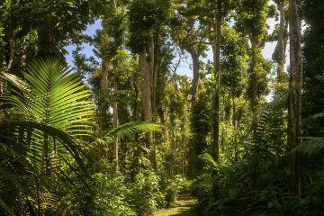 Path through rainforest. Syndicate Forest, Morne Diablotin National Park, Dominica, Lesser Antilles. 2018.