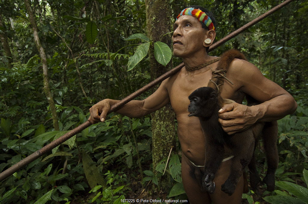 Huaorani Indian, Tage Kaiga, hunting in Amazon rainforest, dead Woolly monkey (Lagothrix sp) slung over shoulder, shot using blowgun. Members of this Indian tribe were uncontacted until 1956. Yasuni National Park, Ecuador. 2007.