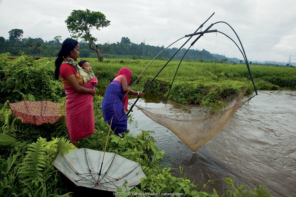 Bodo women fishing in a monsoon stream on the periphery of Nameri National Park, Assam, India.