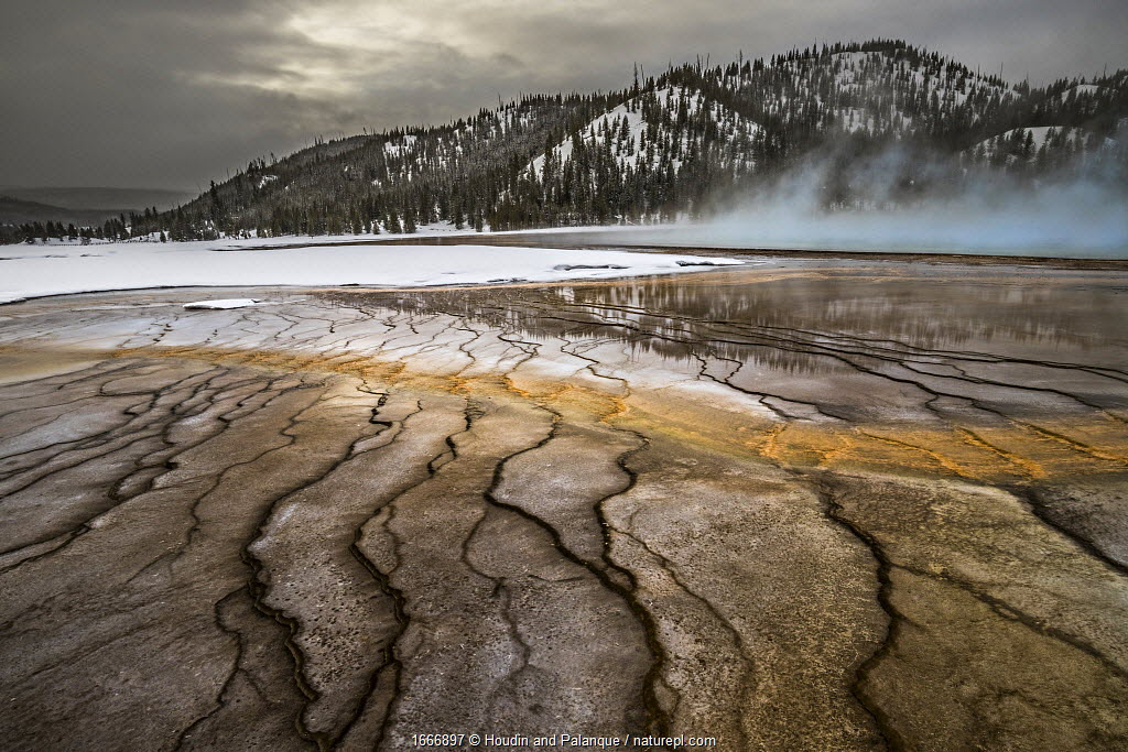 Grand Prismatic Springs on cold winter day with mist / vapour, Yellowstone National Park, USA, January.