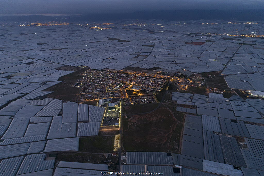 Aerial view of horticultural greenhouses for growing fruits and vegetables. The area is known as the 'sea of plastic' and contains the largest concentration of greenhouses in the world, covering 26,000 hectares. Almeria, Spain. December 2019