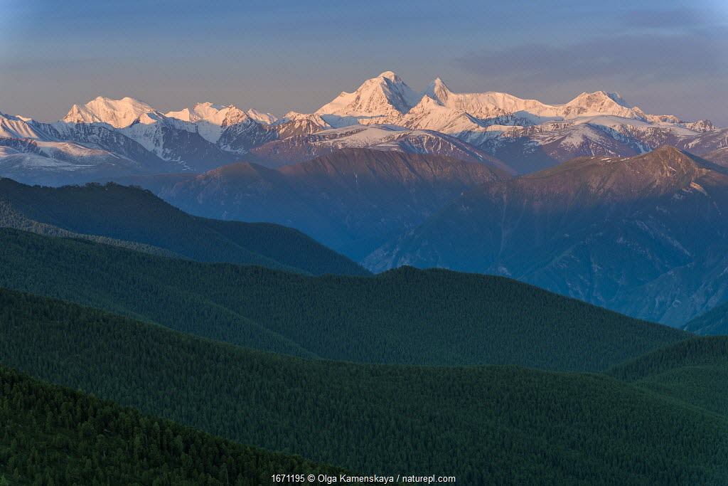 Belukha Mountain, Katun Mountains, Golden Mountains of Altai UNESCO World Heritage Site, June 2019