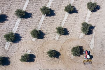 Aerial view of tractor plowing olive field, Toledo, Castilla-La Mancha, Spain. February 2020.