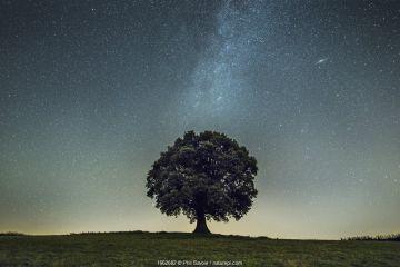 English oak tree (Quercus robur) under stars of the Milk Way, Brecon Beacons National Park, International Dark Sky Preserve, Monmouthshire, Wales, UK