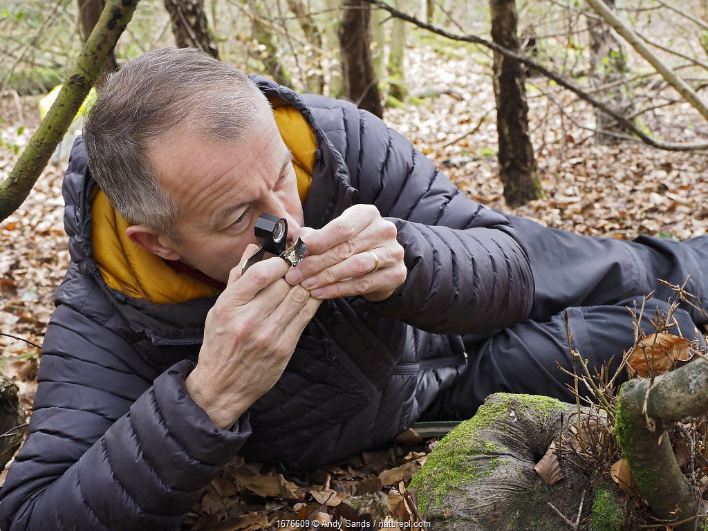 Photographer Andy Sands searching for slime moulds in woodland, Buckinghamshire, England, UK, February