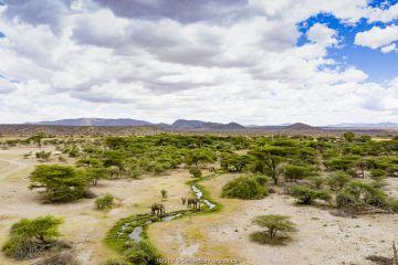 Aerial view of African elephants (Loxodonta africana) drinking and landscape, Samburu Game Reserve, Kenya