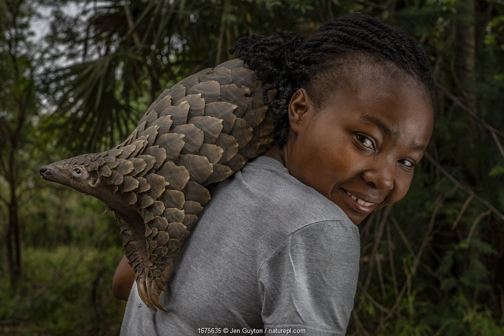 Mozambican wildlife veterinarian Mercia Angela on her daily walk with Boogli, a female Cape pangolin confiscated as infant by Gorongosa's law enforcement team. Boogli's mother had already been sold. Boogli was later released back into the wild. Gorogosa, Mozambique